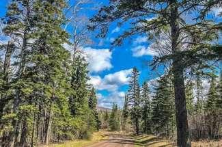 Turnagain Trail