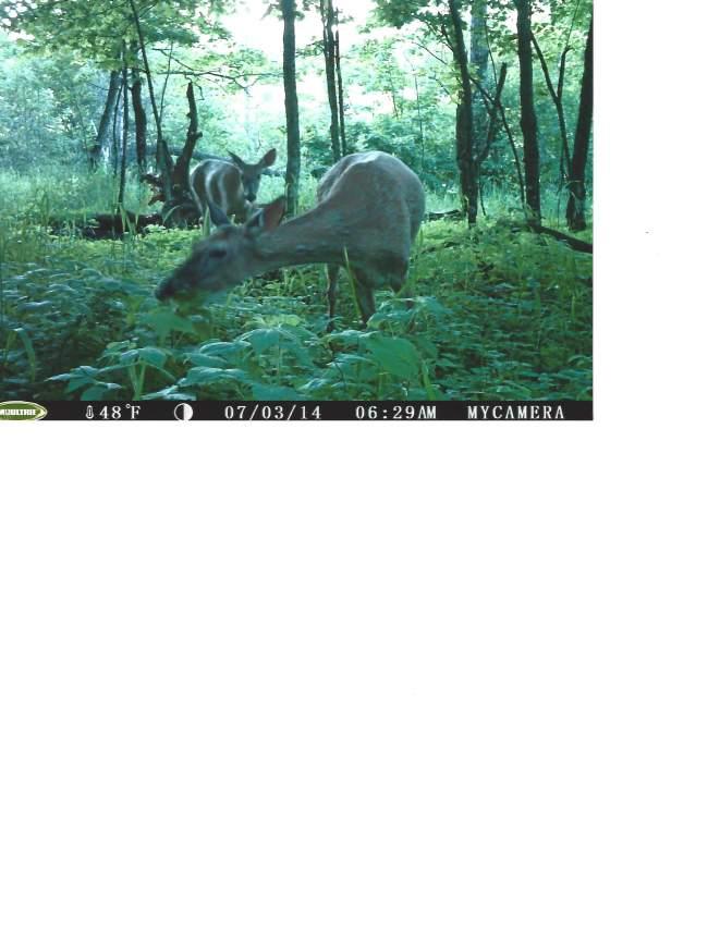 Q3-Deer