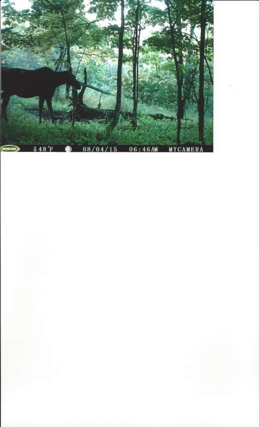Q4-Moose